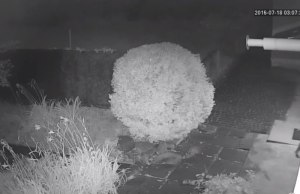 Запись с камеры уличного видеонаблюдения - ночь
